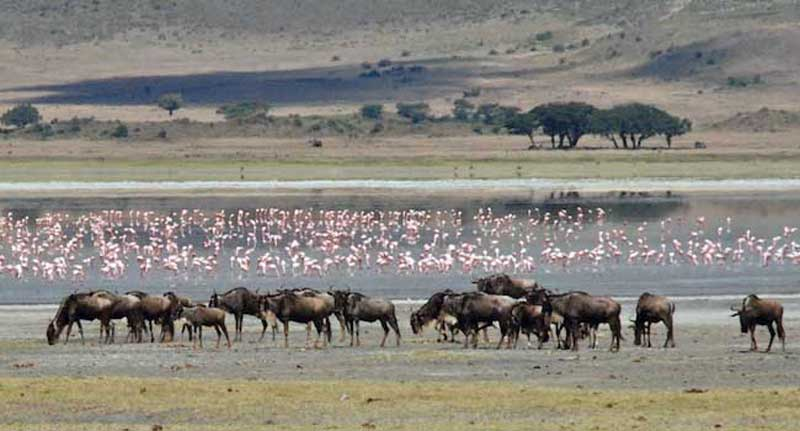 Gnus and Flamingos - The Serengeti