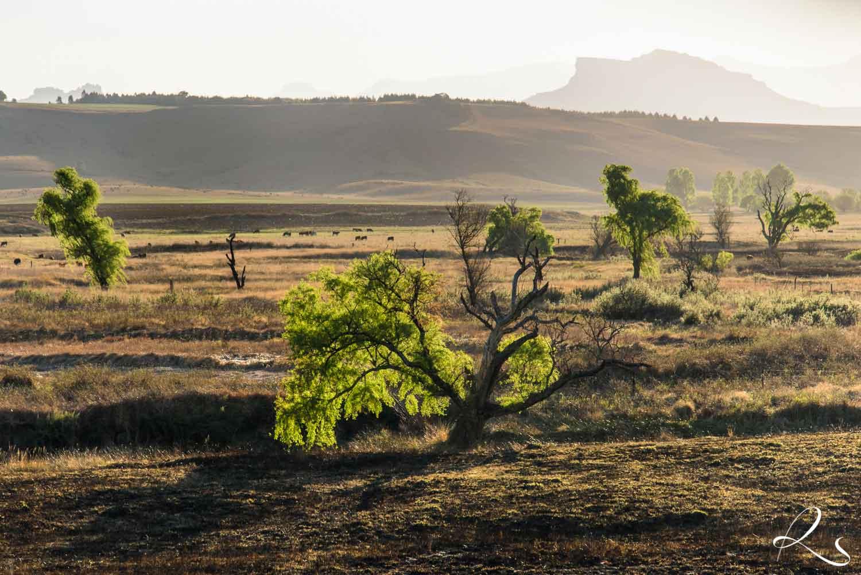 Africa-PhotoMoto-25
