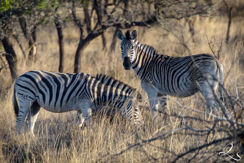 Africa-PhotoMoto-29