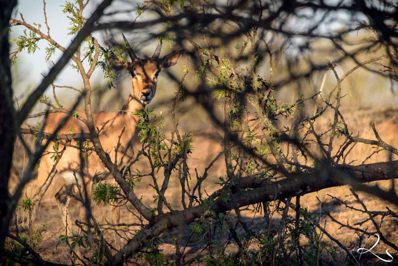 Africa-PhotoMoto-31