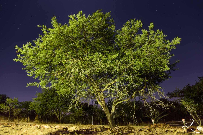 Africa-PhotoMoto-32