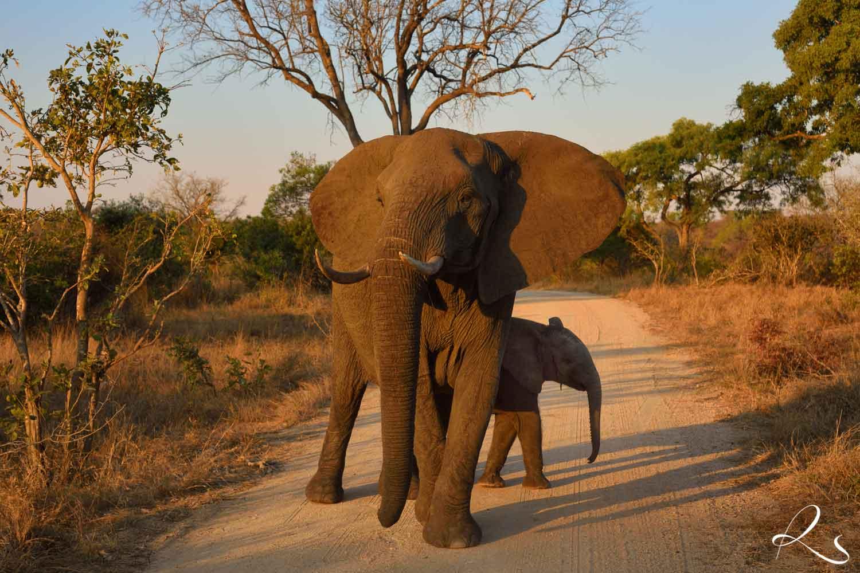 Africa-PhotoMoto-37