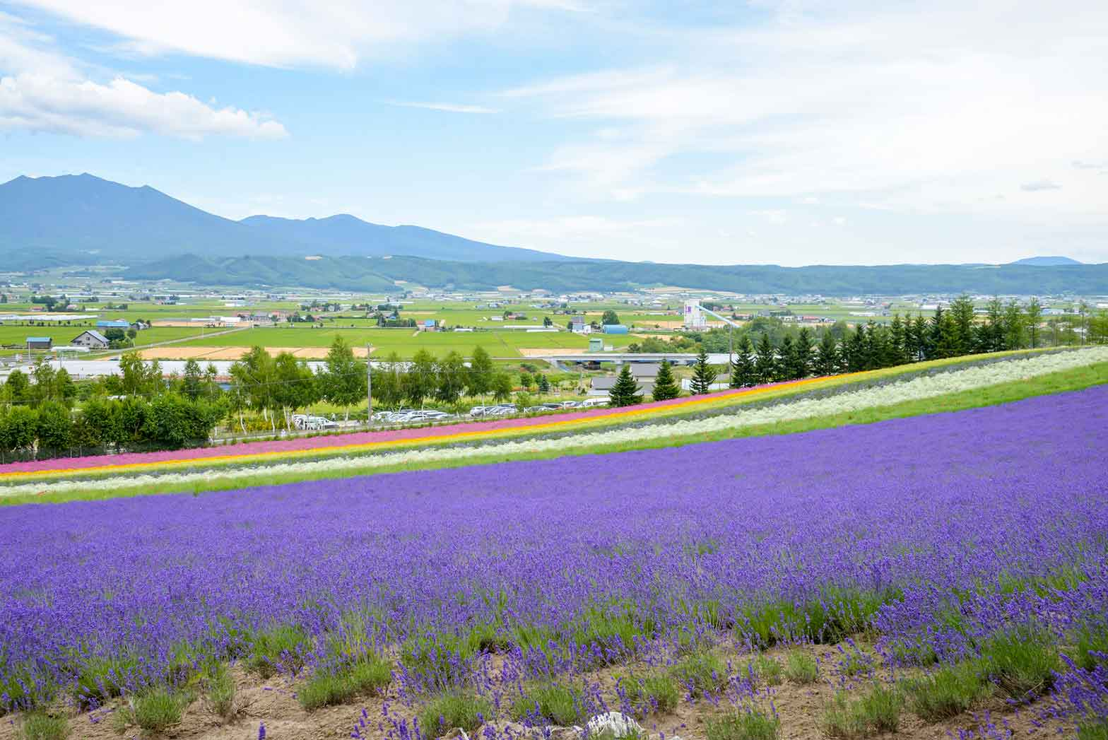 Colorful Lavender Farm