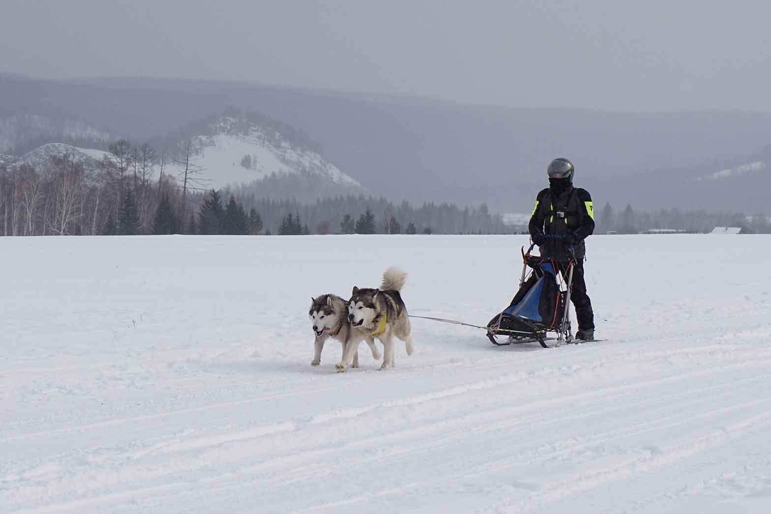 Khaski dog sledding