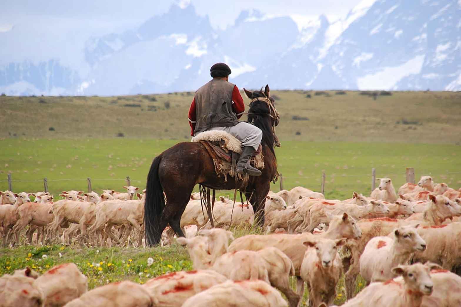 Patagonian Gauchos