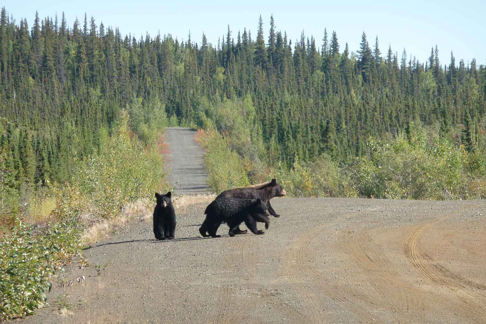 The three bears - Dalton Highway