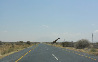 Heart of Africa Motorcycle Tour, Day 13, Giraffe crossing the road., Ayres Adventures