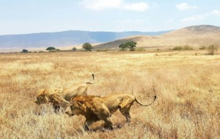 Heart of Africa Motorcycle Tour, Day 12, Serengeti, Ayres Adventures