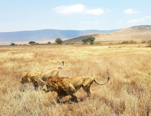 Day 12 – Heart of Africa Motorcycle Tour