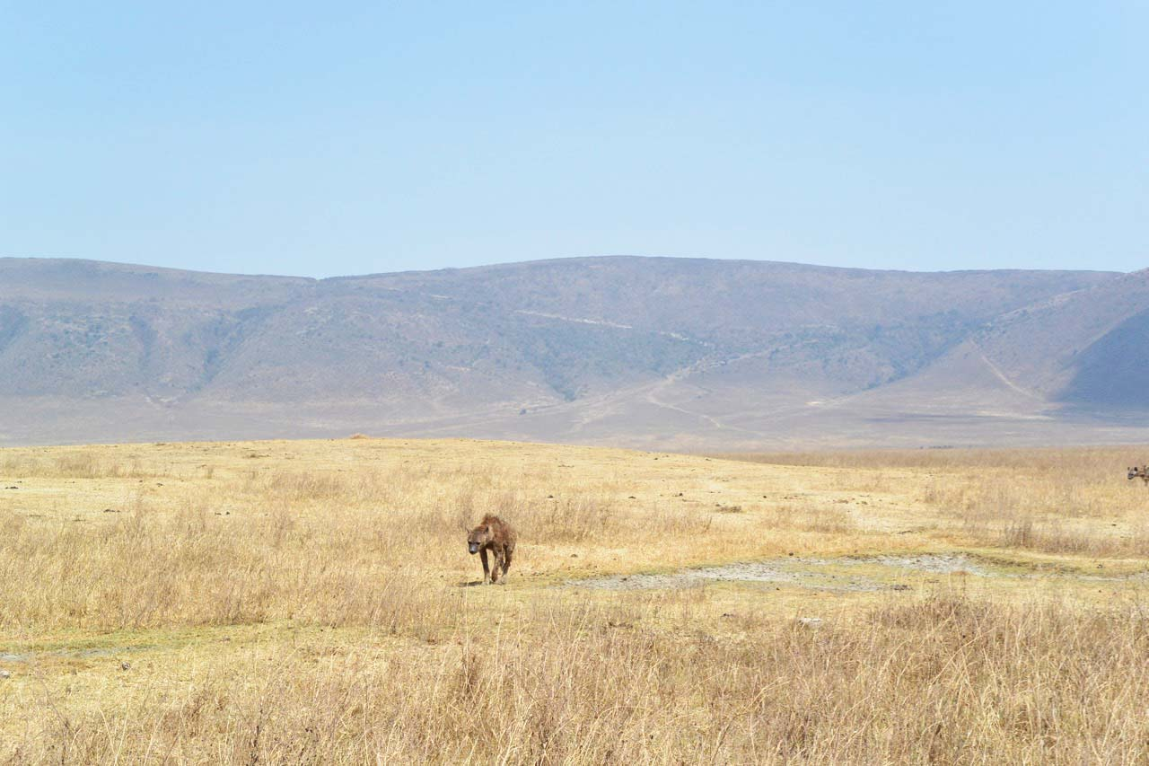 Heart of Africa, Day 12, Serengeti, Motorcycle Tour by Ayres Adventures
