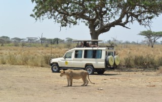 Heart of Africa Motorcycle Tour, Day 11, Serengeti, Ayres Adventures