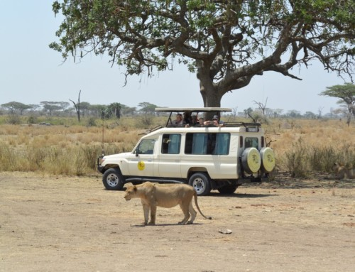 Day 11 – Heart of Africa Motorcycle Tour