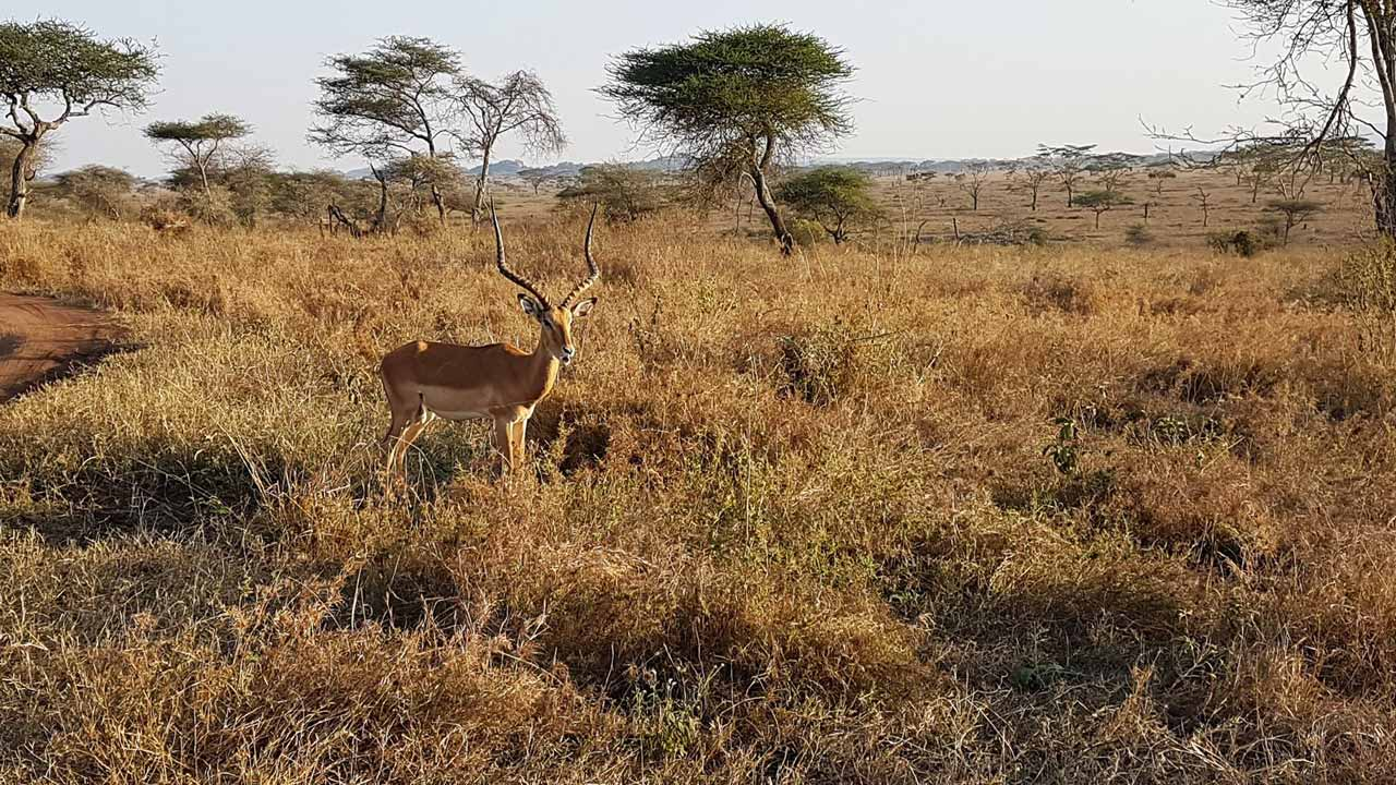 Heart of Africa, Day 10, Serengeti, Motorcycle Tour by Ayres Adventures