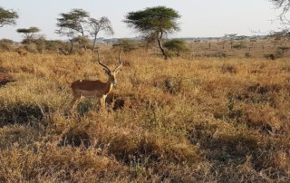 Heart of Africa Motorcycle Tour, Day 10, Serengeti, Ayres Adventures