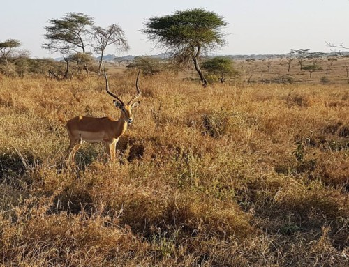 Day 10 – Heart of Africa Motorcycle Tour