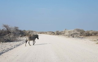 African Call of the Wild Motorcycle Tour 2016, Zebra crossing