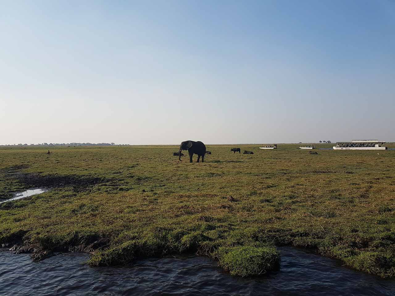 Day 6 - Call of the Wild Motorcycle Tour, Chobe River Cruise