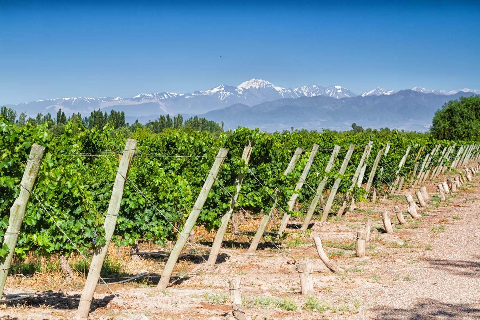 Vineyards and Volcano-Aconcagua, Mendoza, Argentina