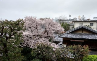 Day 1 of Japan Cherry Blossoms Motorcycle Tour in Japan
