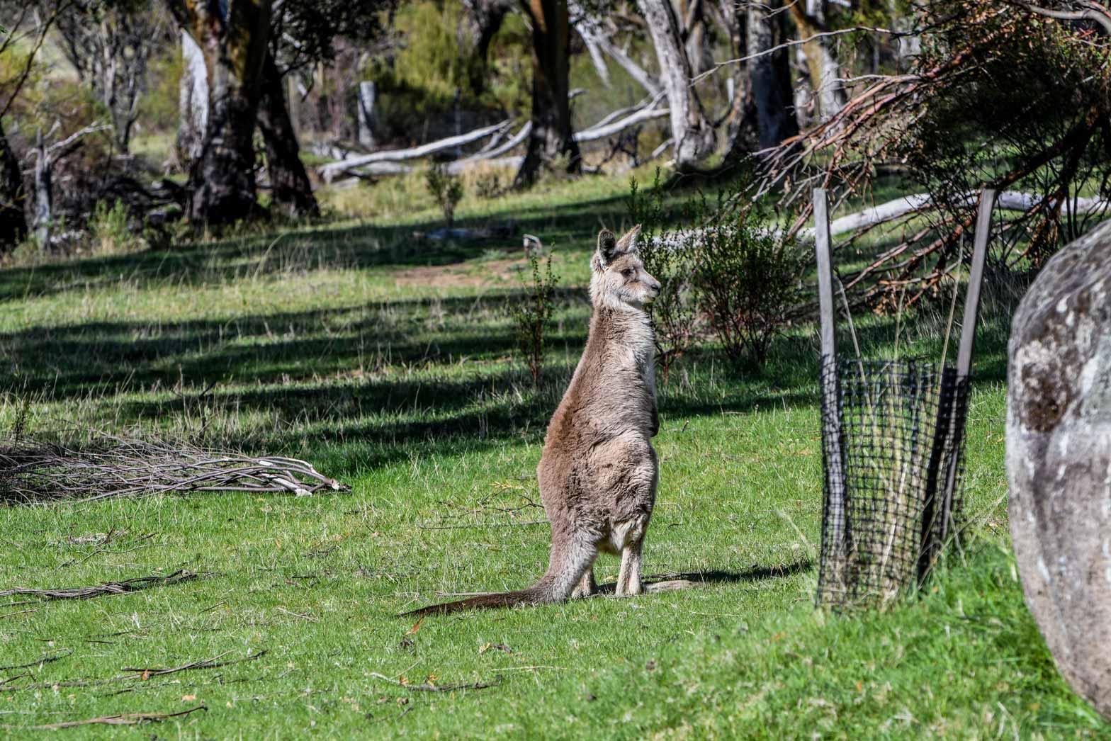 Australia-and-Tasmania-Slider10