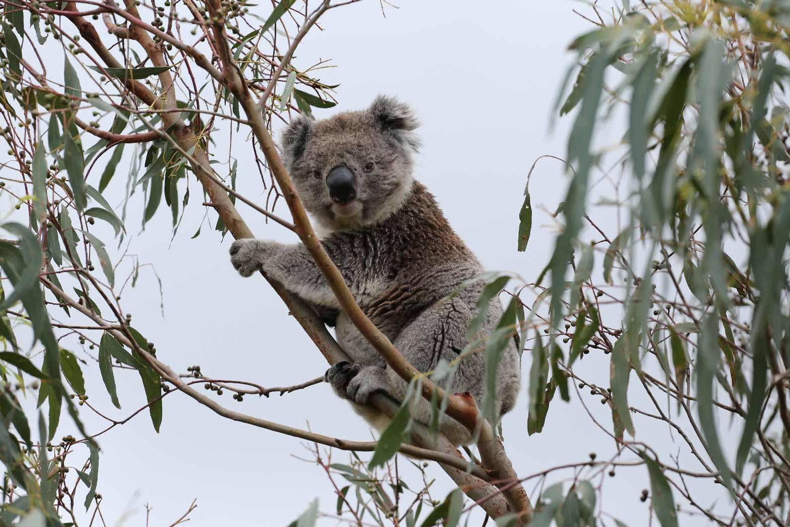 Australia-and-Tasmania-Slider24
