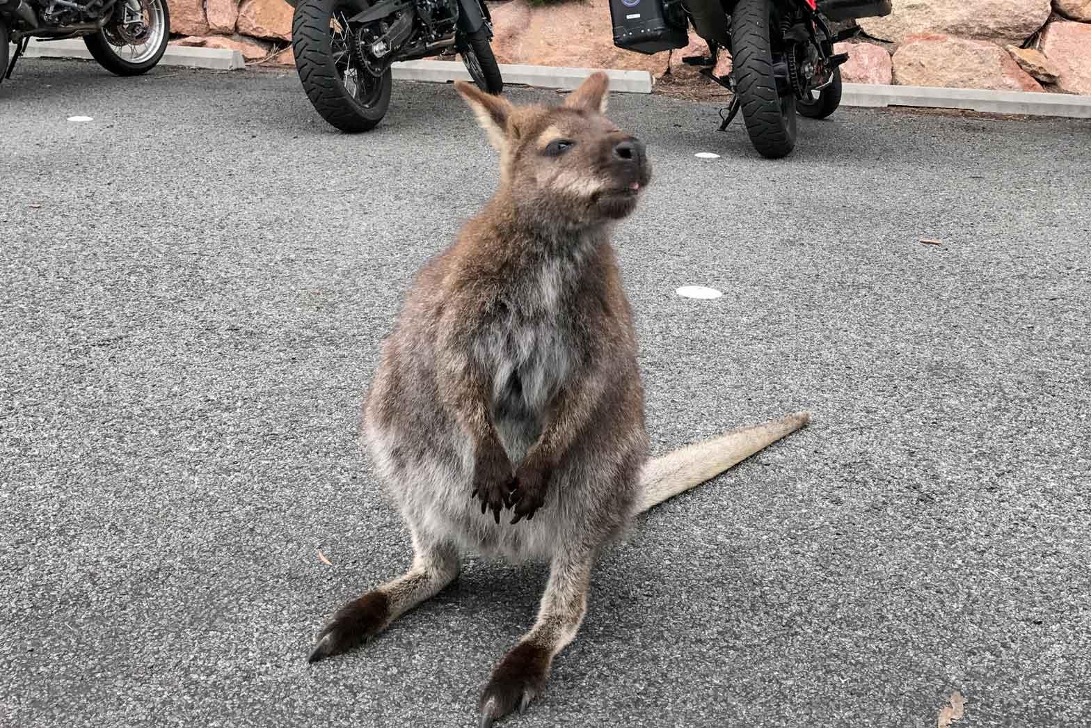 Australia-and-Tasmania-Slider28