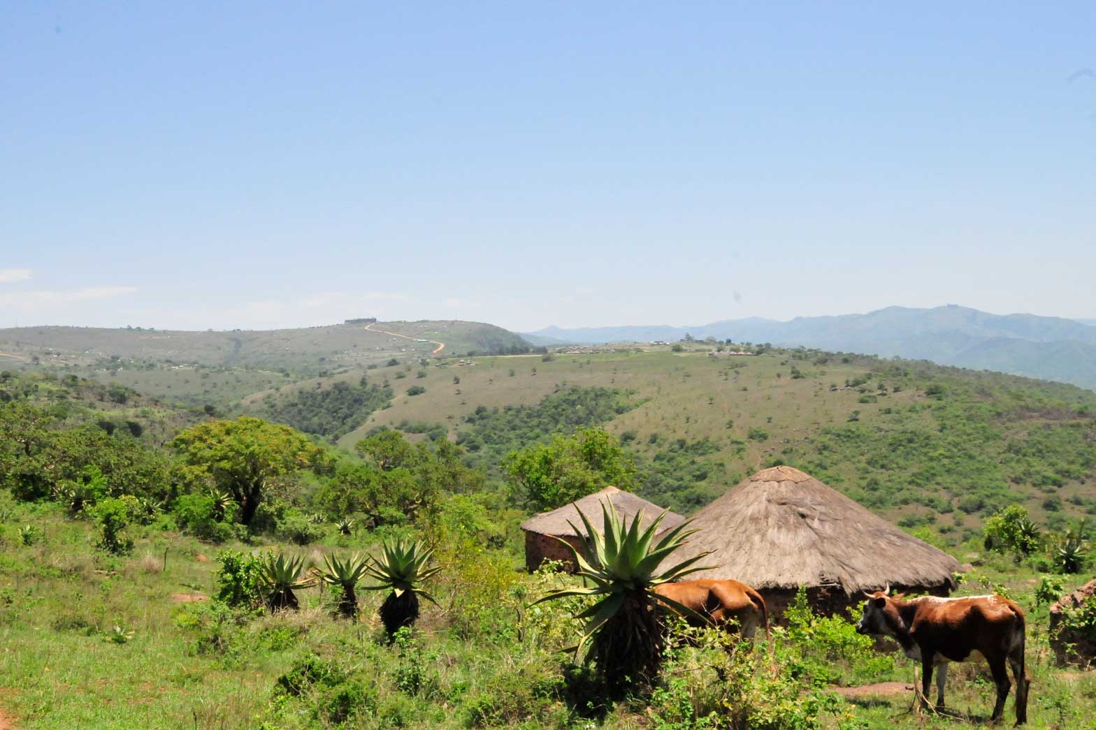 Small Swazi community