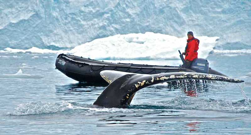 Tail of The Whale - Antarctica